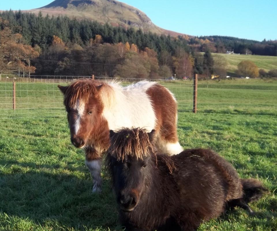 Ponies – Bolt & comet