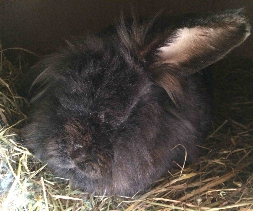 Rabbit – Alfie
