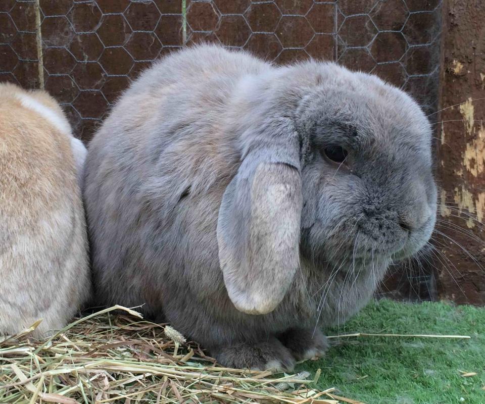 Rabbit – Blossom