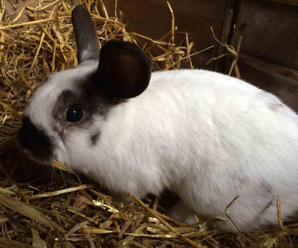 Rabbit – Ernie