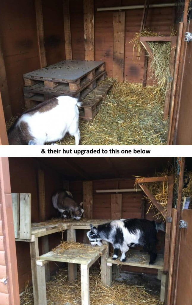 Billy & Tom's new goat hut